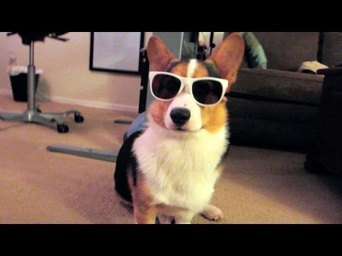 CHILLIN' WITH A COOL CORGI – Life After College: Ep. 379