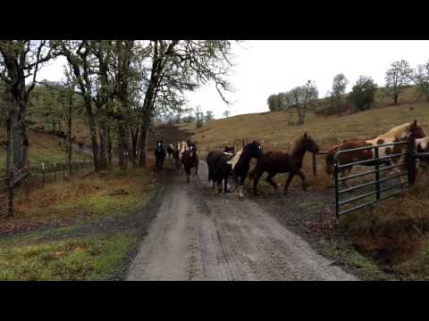 Just Feels Good To Watch 110 RESCUED Horses Running To Pasture