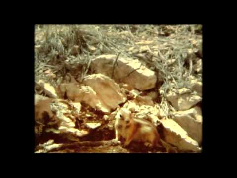 Tekst piosenki The Bloody Beetroots - Butter po polsku