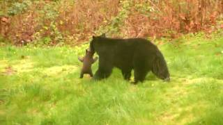 Video Cub stuck in fence  rescued by mother - Maple Ridge 2010 MP3, 3GP, MP4, WEBM, AVI, FLV Juni 2017