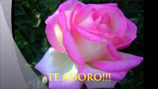 20 jul. 2014 ... Feliz dia do amigo! - Duration: 0:36. Cantinho dos sentimentos 5,712 views · 0:36n. Jessie J. Flashlight ( Marcelly Garcia simplesmente...