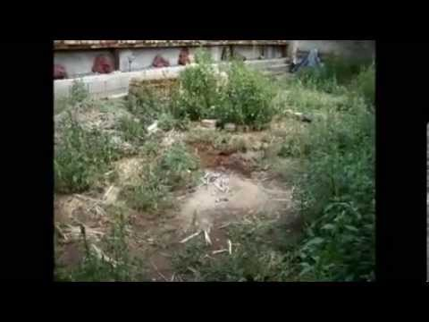 Greening the New Mexican Desert Using Permaculture End of Year 1 Observations Part 2
