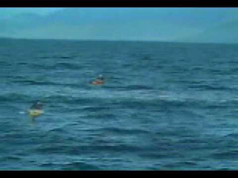 Orca asesina se divierte con un humano