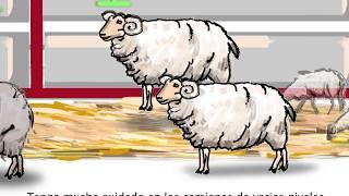 Buenas y mejores prácticas para el transporte de ovejas