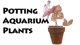 How to save money growing aquarium plants by Rachel O'Leary