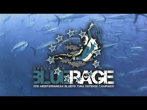 Sea Shepherd Launches Operation Blue Rage in the Mediterranean