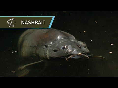 NASHBAIT - THE HISTORY OF CARP FISHING BAIT