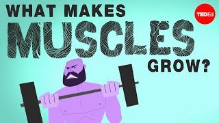 What makes muscles grow? – Jeffrey Siegel