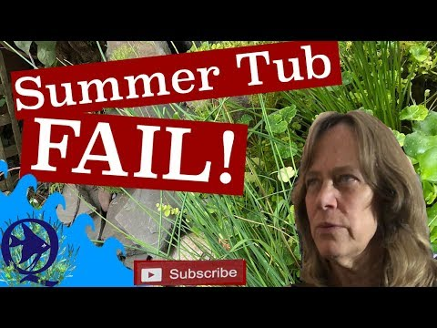 Summer Tubs for Fish-  any Fry In those Outdoor Mini Pond?