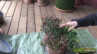 #1420 Kübelbepflanzung für die Wintertage mit Sabine Reber
