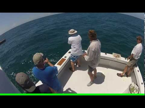 Nurse shark on medium tackle