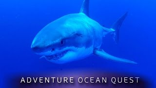 Video ► Adventure Ocean Quest - The White Sharks of Guadalupe (FULL Documentary) MP3, 3GP, MP4, WEBM, AVI, FLV Juli 2019