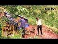 《走遍中国》5集系列片《共筑绿色家园》(5)退金花种金树  20180622  | CCTV中文国际