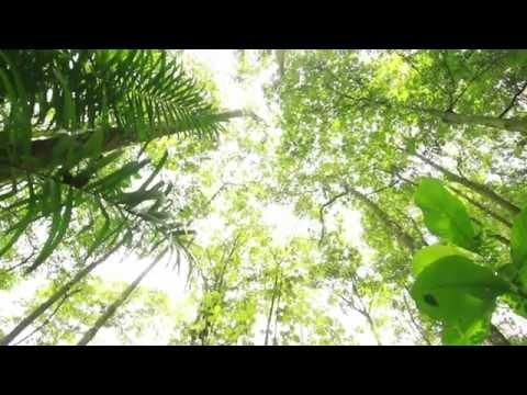 REDD+ COSTA RICA