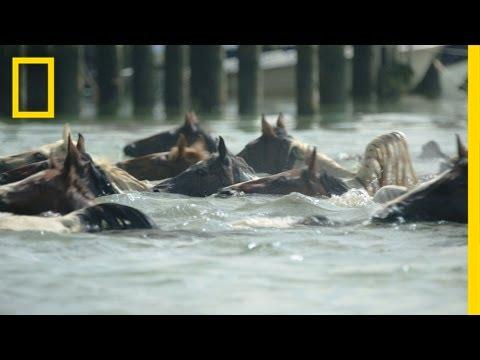 Póniúsztatás egy tengeri cowboy szemszögéből