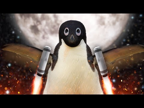 NOOT NOOT  Learn To Fly 3