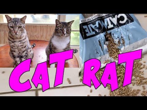 Kissa kavaltaa rikoskumppaninsa – Thug Life