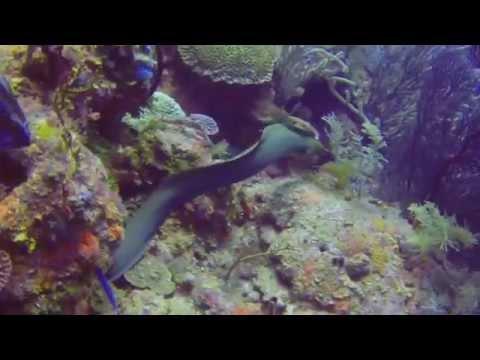 Dive Trip - Roatan, Honduras   15 Jul 14