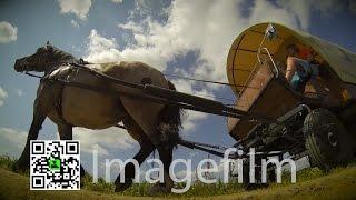Pferdecamper