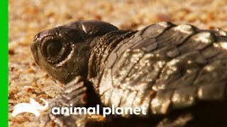 The Weird and Wonderful Wildlife of Mexico by Animal Planet