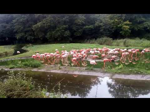 Flamingo Lagune - Tierpark Berlin - September 2017