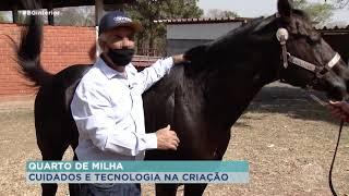 Tecnologia aliada na criação e cuidado a raça Quarto de Milha