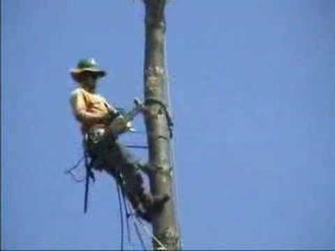 Tree Cutting Goes Wrong