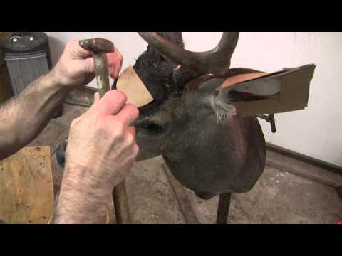 Testa's Taxidermy Tip's – Mounting a Deer Head (Part 4)