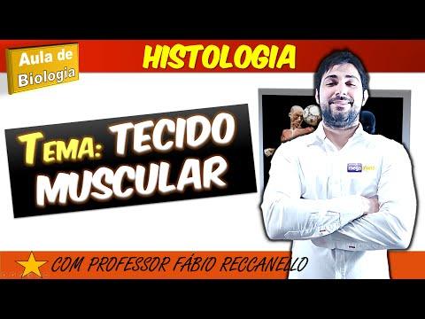 muscular - Adquira os slides desta aula e aulas extras no site: http://megaaluno.com/course/biologia-para-medicina/ Lista de exercícios: http://destrinchandoahistologia...