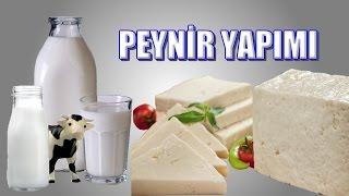 Evde doğal peynir nasıl yapılır?Bu sorunun cevabı videoda. Mutlaka izleyin.http://www.denizlihorozu.com/YCL Kuluçka - Yücel IŞIK