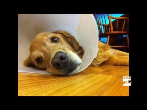 Come curare le piccole ferite dei nostri animali domestici
