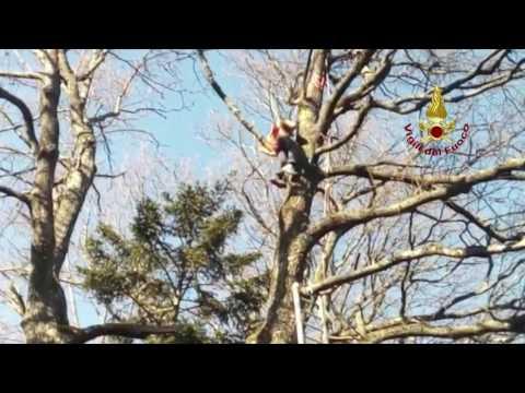 VIDEO VIGILI DEL FUOCO - PARAPENDIO INCASTRATO SULL'ALBERO