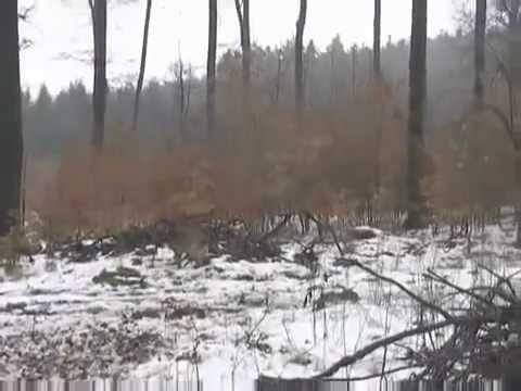 video shock: bambina che vola nel bosco! assurdo!