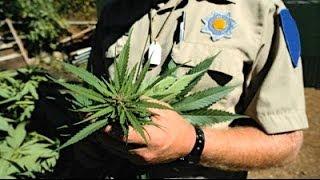 Marijuana Law And Winning The Drug War With Allison Margolin