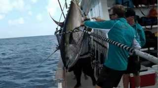 great fishing yellow fin tuna 274.4 lb.by Thai angler Jew Polaris at Clipperton Island Maxico on March 2012-03-05 with Royalstra ...