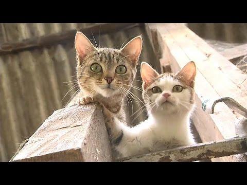 Wie Katzen nach Europa kamen: Aus dem alten Ägypten w ...