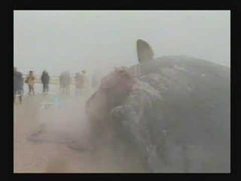 La explosión de una ballena