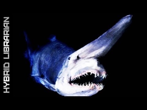 creatures - Beautiful, bizarre or scary, here are ten alien-looking creatures from the depths...(HQ - 03/2013) Click below to unlock the power of YouTube and become a me...