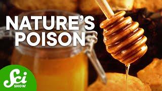 Video Top 5 Deadliest Substances on Earth MP3, 3GP, MP4, WEBM, AVI, FLV Agustus 2019