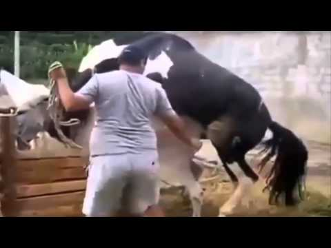 Video Animal Mating Crazy Videos Compilation ✔ funny animal video 2015 part2 (2014) download in MP3, 3GP, MP4, WEBM, AVI, FLV January 2017