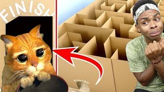 Video Giant Maze Labyrinth For Cat Kittens Can They Exit MP3, 3GP, MP4, WEBM, AVI, FLV Juni 2019