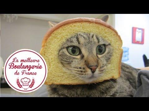 A Cat Run Into A Bakery