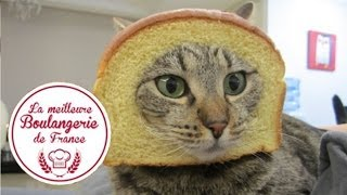 A Cat Run Into A Bakery In France