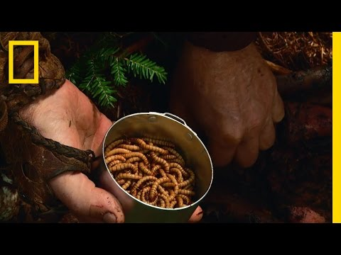 Video Mighty Maggots | The Legend of Mick Dodge download in MP3, 3GP, MP4, WEBM, AVI, FLV February 2017