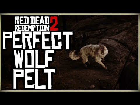 HOW TO GET A PERFECT WOLF PELT - RED DEAD REDEMPTION 2 PRISTINE WOLF HUNT