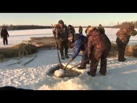 рыбалка для начинающих телепрограмма видео все выпуски