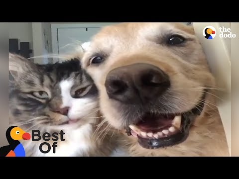 Animals Thankful For Being Rescued and Loved Compilation  The Dodo Best Of