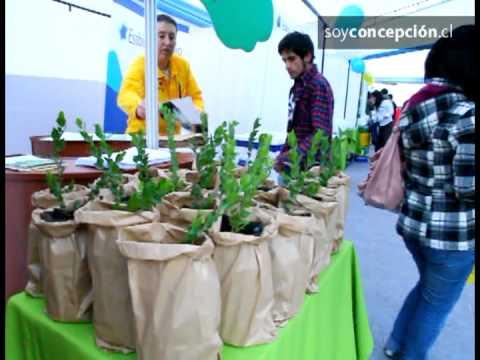Los penquistas se alinean con la segunda campaña de reciclaje electrónico