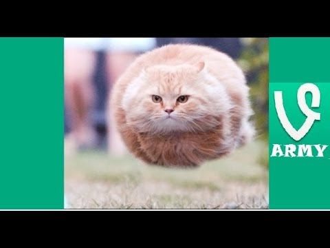 I Believe I Can Fly | FUNNIEST VINES Compilation [HD] Part 29