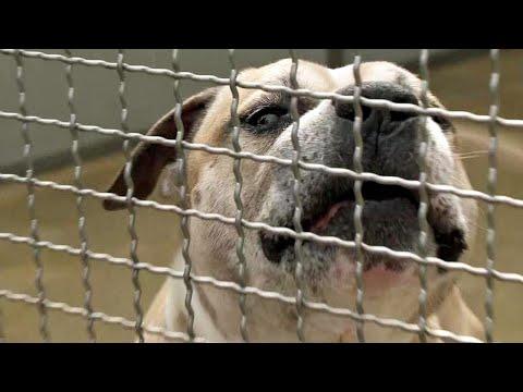 Tödliche Kampfhund-Attacke: War